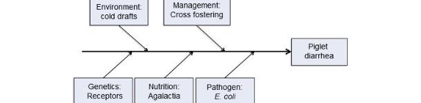 Modell der Krankheitsursachen unter Berücksichtigung von fünf Faktoren