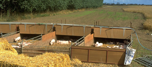 Outdoor Cosikennels holding pigs from weaning to 9 weeks old