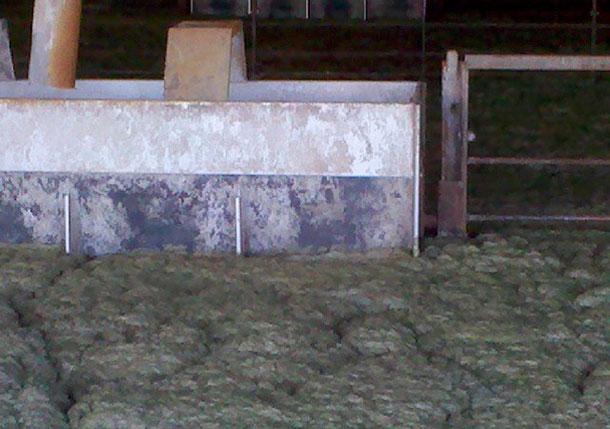 Schaum in dem mit Tieren belegten Stall eines Schweinemastbetriebs mit Güllegrube.