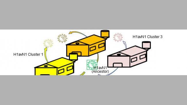 Betriebsbezogene genetische und antigenische Heterogenität