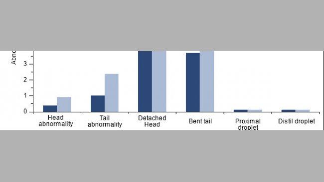 Auswirkung der PCV2-Impfung bei PCV2-positiven Ebern auf die Spermienmorphologie