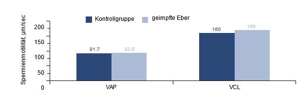 Auswirkung der PCV2-Impfung bei PCV2-positiven Ebern auf die Spermienmotilität