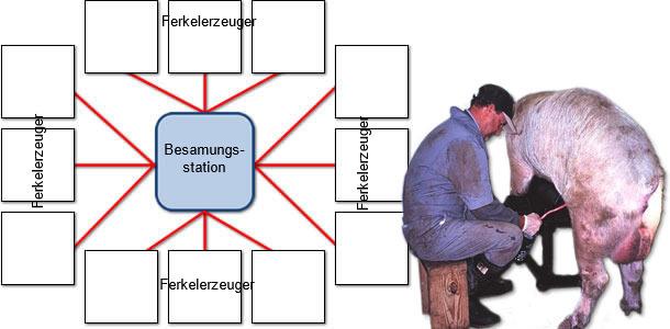 Beispiel zur Verbreitung von PCV2 von einer Besamungsstation auf Sauenbetriebe