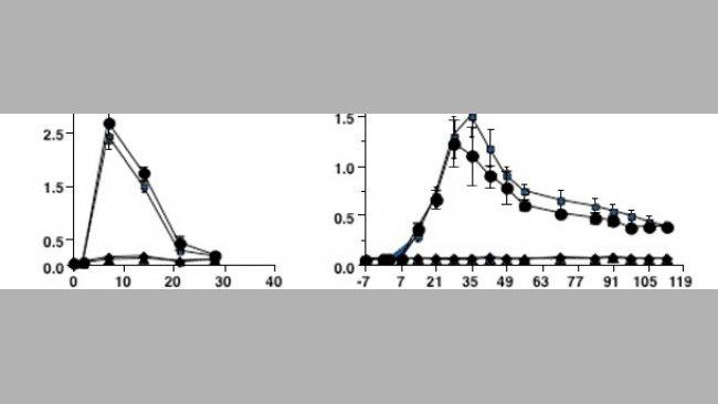 Die Kinetik von Antikörperreaktionen auf Infektionen durch PRRSV Typ 2