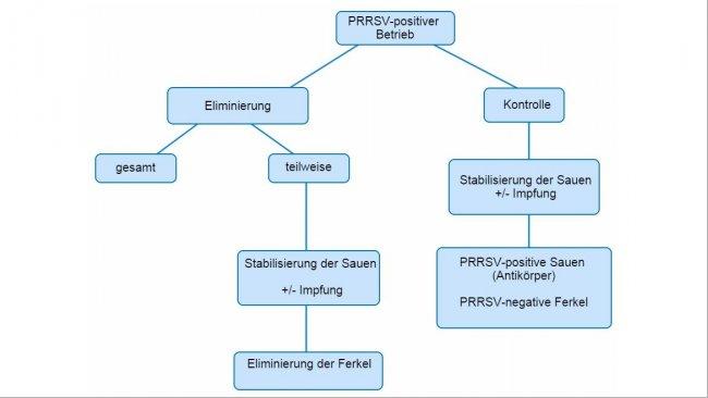 Abbildung 1: Schematische Darstellung der verschiedenen Ansätze bei PRRSV-positiven Betrieben