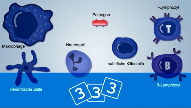 Erfahren Sie bei 3drei3 mehr über Immunologie