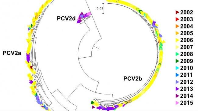 Abbildung 2. Phylogenetisches Baumdiagramm der maximalen Wahrscheinlichkeit: Die 729 ORF2-Sequenzen der PCV2-Datenbank des UMN-VDL sind je nach Jahr farblich gekennzeichnet. Die Genotypen sind vermerkt.