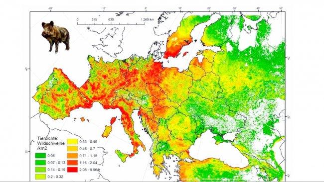 Abbildung 2: Geschätzte Eberpopulation in Europa. Quelle: FAO-ASFORCE, Mai 2015