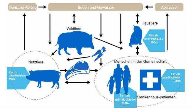 Ablaufdiagramm zu den Determinanten der Antibiotikaresistenz bei den einzelnen Reservoirs: Die Bereiche, in denen Antibiotika verabreicht werden, sind blau markiert. http://www.effort-against-amr.eu/
