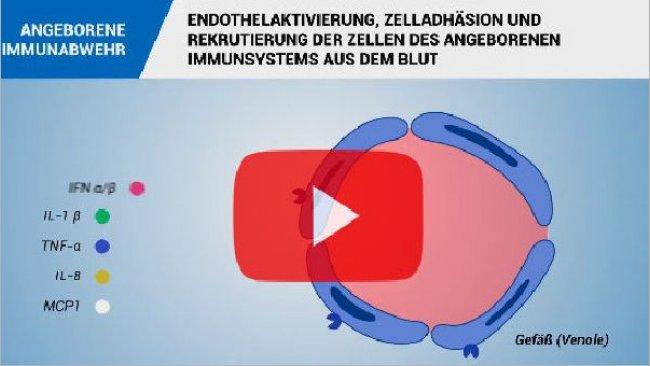 Angeborene Immunantwort