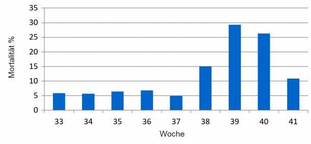 Grafik 1: Prozentualer Anteil der wöchentlichen Mortalität der Ferkel vor dem Absetzen vor und während des PED-Ausbruchs