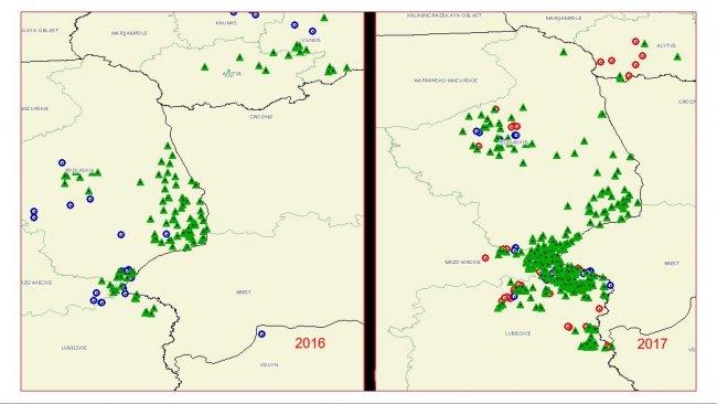 Ausbreitung der ASP in Polen (Quelle: OIE)