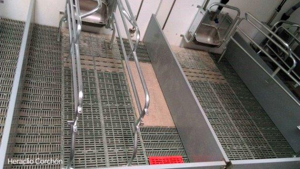 Abferkelbucht mit Kunststoffboden für die Ferkel und die Sau: Der Boden unter der Sau ist im vorderen Bereich weniger durchlässig.