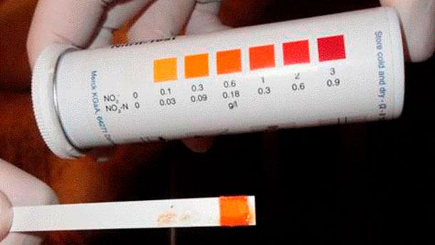 Abbildung5: Nitrit-Teststreifen, der die Nitritvergiftung anzeigt.