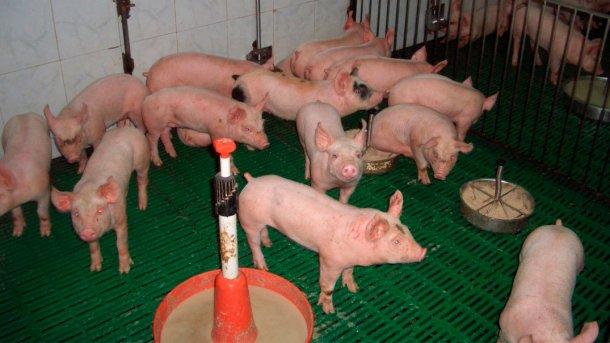 Abbildung 2: Adäquate Nutzung von Futtermitteln und Futterstellen