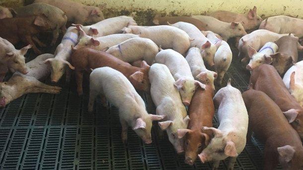 Abbildung 2: Tiere, die klinische Symptome einer Verschlechterung ihres Körperzustands zeigen