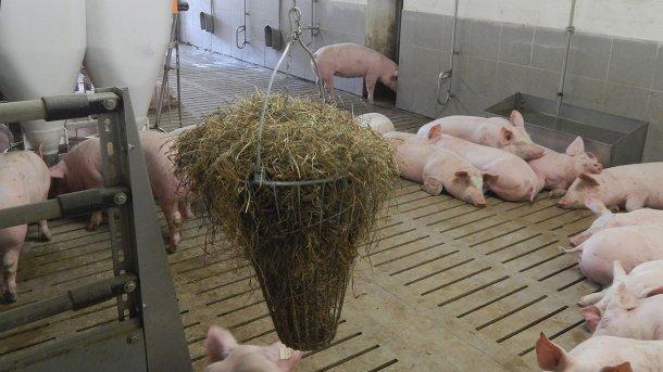 Bild 2: Den Schweinen zur Verfügung stehendes Beschäftigungsmaterial (Bild mit freundlicher Genehmigung von Inge Böhne)