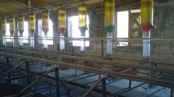 Foto 1: Um in den Tagen, die vom Absetzen bis zur Rausche vergehen, einen hohen Futterverbrauch zu erzielen und gleichzeitig eine Verschwendung von Futter zu vermeiden, können Fütterungssysteme wie das auf dem Foto gezeigte eine Option darstellen (Bild mit freundlicher Genehmigung von Gori Salamó).