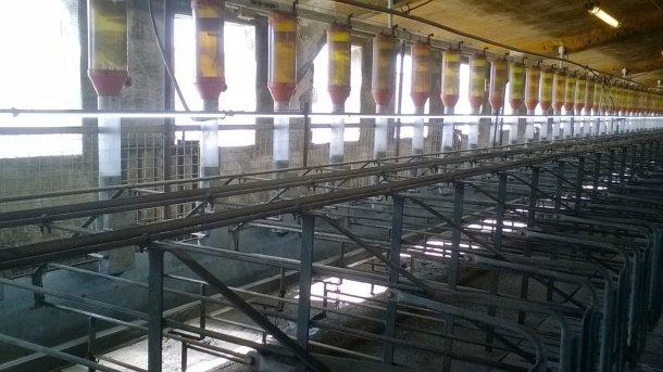 Foto 4: Der Einbau von Leuchtstoffröhren oder LED-Leuchten 1 Meter über der Sau erfolgt immer häufiger, um eine Beleuchtungsstärke von 150-200 Lux zu gewährleisten und so den Eintritt in die Rausche zu verbessern (Foto mit freundlicher Genehmigung von Gori Salamó).