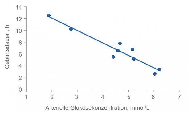 Abbildung 2: Die Geburtsdauer wird stark verlängert, wenn die Energie der Sauen aufgebraucht ist. Der Plasmaglukosewert liegt normalerweise konstant bei 4,5 (zwischen 4 bis 5) mmol/l, aber kurz nach der Fütterung wird dieser Wert überschritten und, falls der Glykogenspeicher in der Leber erschöpft ist, kann er sich mehrere Stunden nach der Fütterung außerhalb der empfohlenen Werte befinden.