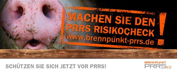 PRRSV-Risikocheck online durchführen und kostenlose Betriebsanalyse sichern