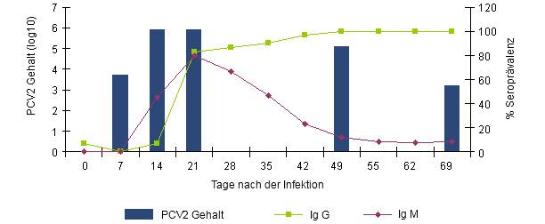 Entstehung der IgG und IgM Antwort gemessen mit einem Blocking ELISA (INGENASA) und der PCV2 Virämie nach experimenteller Exposition (Segalés et al. 2005).